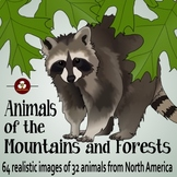 Forest Animals Realistic Clip Art