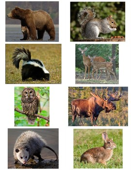 Forest animal Trivia