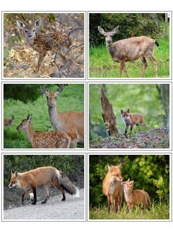 Forest animals mother and baby matching cards