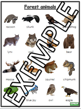 Forest animals vocabulary