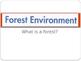 ForestAndForestAnimals