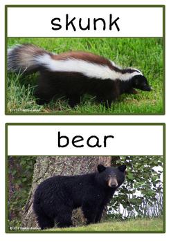 Forest / Woodland Animals Photo Set