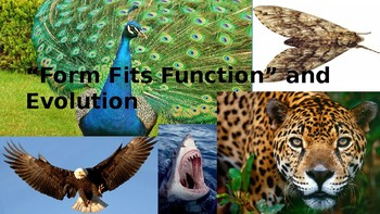 Form Fits Function Ppt