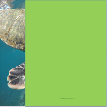 Formulating WH Questions With Ocean Animals: Speech Language Therapy