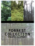 Forrest Clipart (For Personal or Commercial Use)