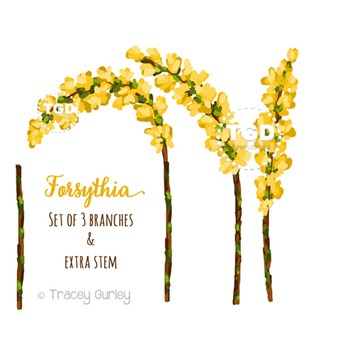 Forsythia Clip Art Set Printable Tracey Gurley Designs