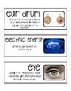 Foss Science Vocabulary- Sound & Light