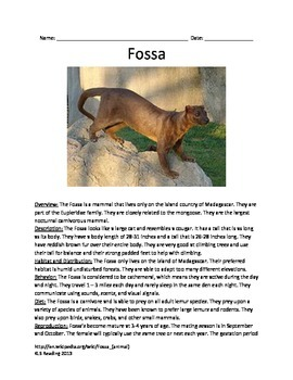 Fossa - endangered animal - information article questions