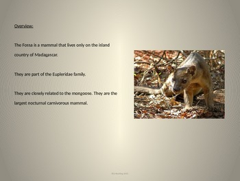 Fossa - endangered animal - power point - facts history information pictures
