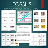 Fossil Types (Mold, Cast, Carbonization, Trace, etc)- Sort