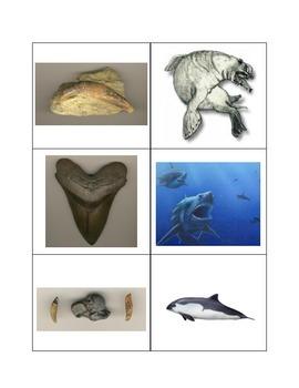 Fossil Challenge Activities