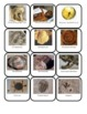 Fossil Classification Sorting