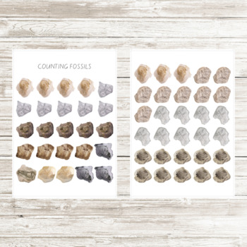 Fossil Counting Activity