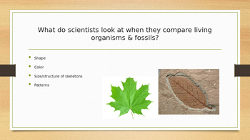 Fossil Facts