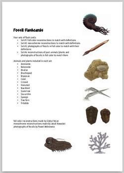 Fossil Flashcards!