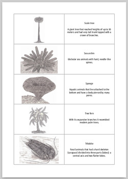 Fossil Flashcards!