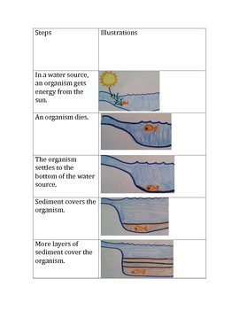 Fossil Fuel Formation Flashcards