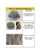 Fossil Lab - Station Labels (Printables) Fossil Identification