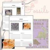 Fossil Observation and Inference No-Prep Worksheet (Distan