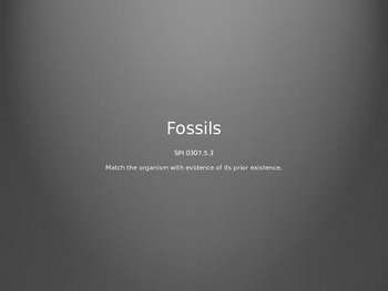 Fossil Pictures