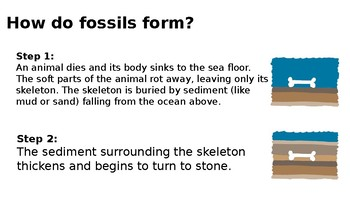 Fossil Record + 3 labs