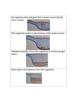 Fossil Sequence Flashcards