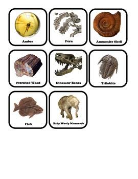 Fossil Shadow Match