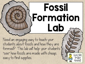 Fossil Formation Lab - Simulate How Fossils are Formed