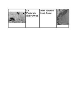 Fossil Type Sort