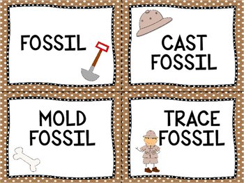 Fossil  Vocabulary