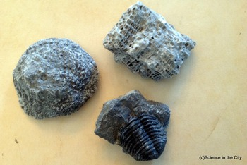 Fossil and Paleontology Photos