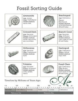 Fossil sorting guide and poster