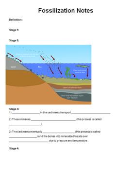 Fossilization PowerPoint, Notes, Webquest Activity -- Middle School