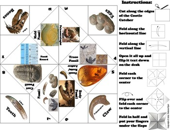 Types of Fossils Activity/ Foldable Unit Quiz (Geology Unit)