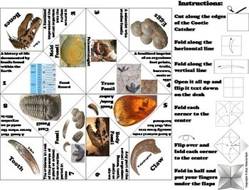 Types of Fossils Activity/ Foldable Unit Quiz (Geology Unit)