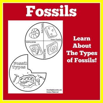 Fossils Activity | Fossils Worksheet | Dinosaur Fossils | Archaeology