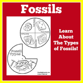 Fossils Activity | Fossils Worksheet | Dinosaur Fossils |