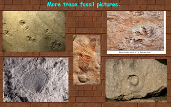 Fossils Information Flipchart