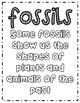 Fossils: A Complete Unit