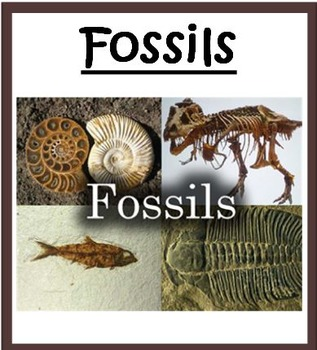 Fossils BUNDLE - 3rd Science