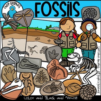 Fossils Clip Art Set - Chirp Graphics by Chirp Graphics | TpT
