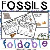 Fossils Worksheet Foldable Book