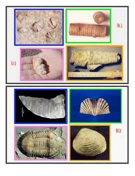Fossils Identification 1 SURFFDOGGY