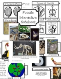 Fossils Interactive Notebook