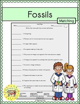 Fossils Matching