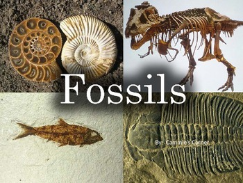 Fossils POWERPOINT WITH NOTES - 3rd Grade science