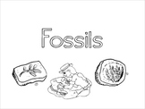 Fossil PowerPoint & Activities
