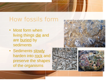 Fossils-Powerpoint