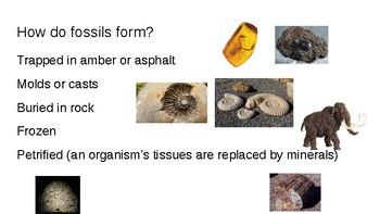 Fossils & Relative Dating Slideshow