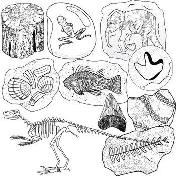 Fossils Clip Art II by Studio Devanna Teachers Pay Teachers